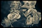 B & W Flowers 02