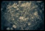 B & W Flowers 16